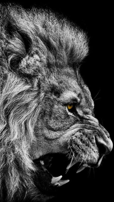 Raged Lion